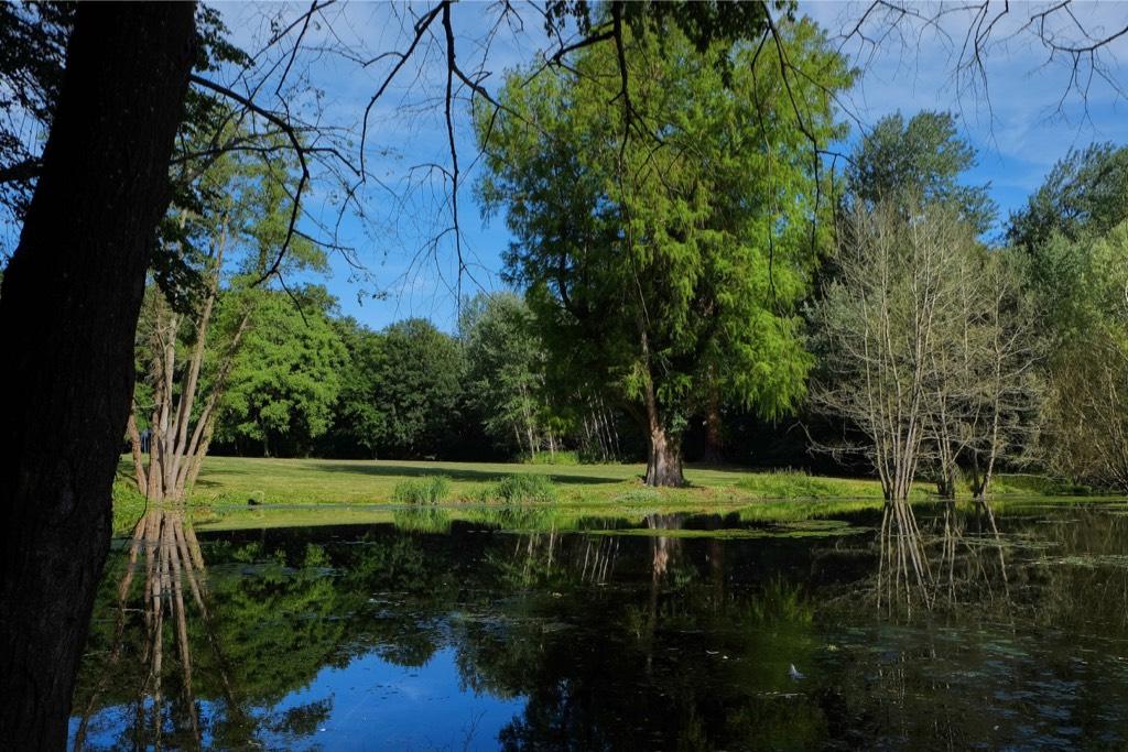L'étang du château de Vaugrigneuse